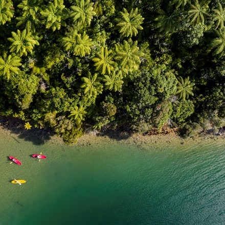 An aerial view of four kayaks exploring the shoreline of Punga Cove in the Marlborough Sounds in New Zealand's top of the South Island